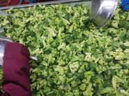 IQF Broccoli Florets 3-4cm / 4-5cm Frozen Green Vegetables BRC