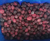 Wholesale Bulk IQF Sweet Blackberry Freezing Delicious Frozen Blackberry
